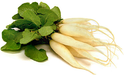 Picture of Radish White Netherlands