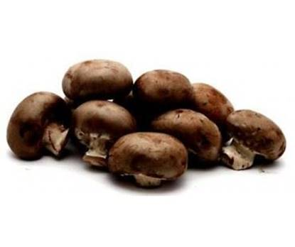 Picture of Mushroom Brown Netherlands