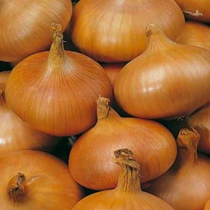 Picture of Onion Spain