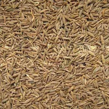 Picture of Cumin Whole - India     ( 1 KG )