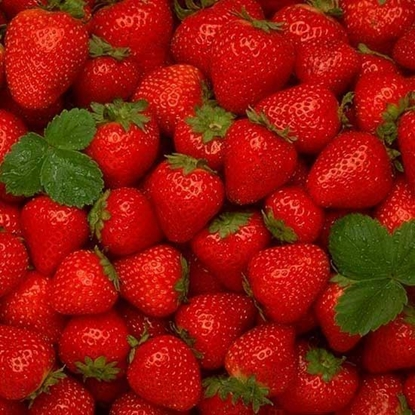 Picture of Strawberry Greece-Per KG