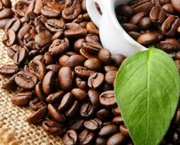 Picture for category Coffee Beans
