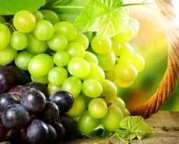 Picture for category Grapes