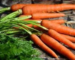 Picture for category Carrot