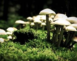 Picture for category Mushroom
