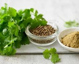 Picture for category Coriander