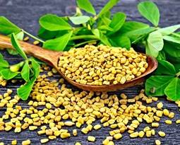 Picture for category Fenugreek
