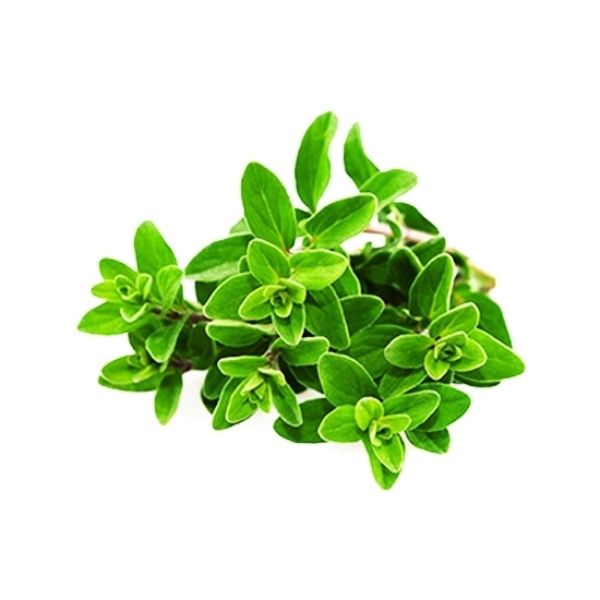 Picture of  Marjoram ( 1000 GM )