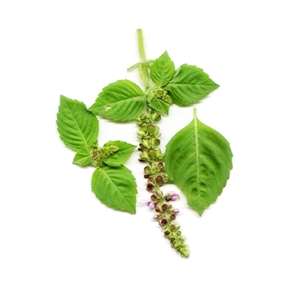 Picture of Basil Leaves ( 1000 GM )