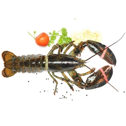 Picture of Whole Lobster Omani 850/1000 FW 1X10KG