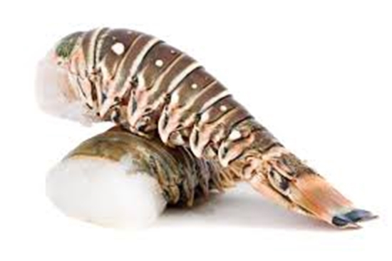 Picture of LOBSTER TAIL 6-7 OZS - 1 X 5 KG