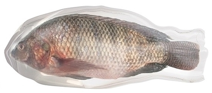 Picture of Frozen tilapia fish -500\300