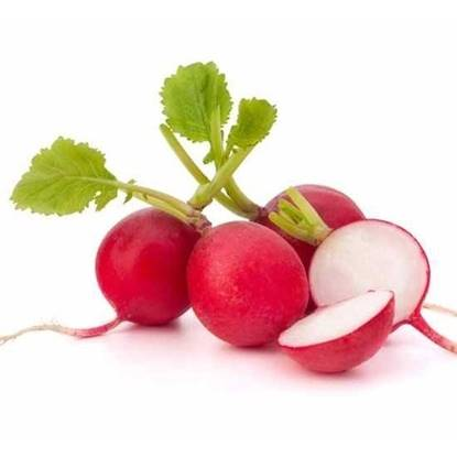 Picture of Radish Red Netherlands