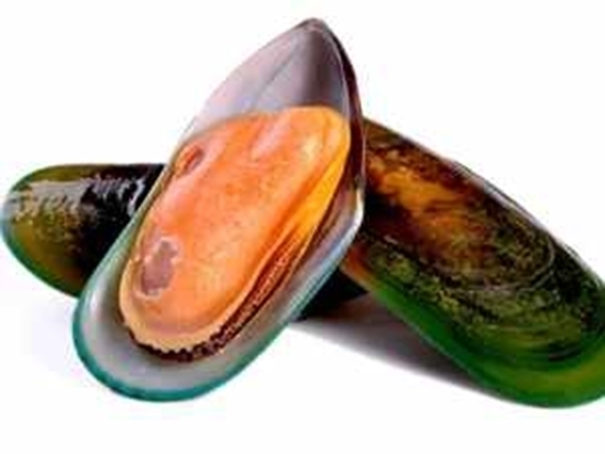 Picture of HALF SHELL MUSSELS - Per KG