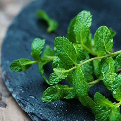 Picture of Mint Leaves