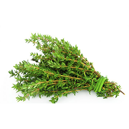Picture of Thyme Fresh
