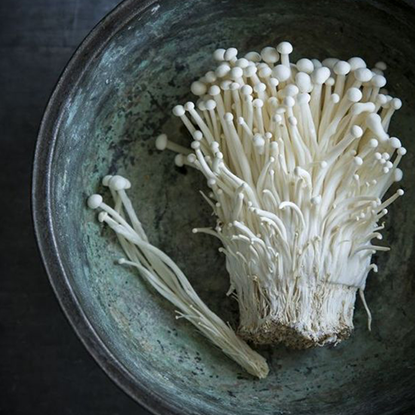 Picture of Mushroom Oyster