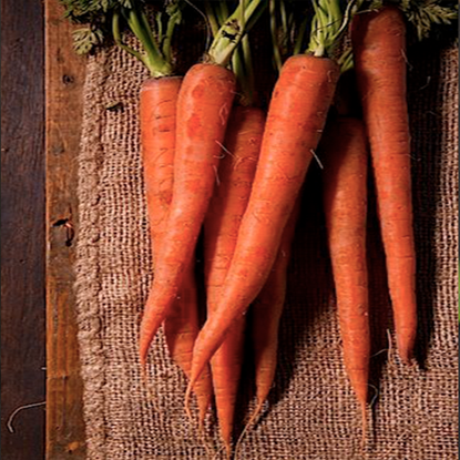 Picture of Carrot Australia