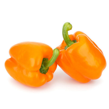 Picture of Capsicum Orange
