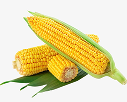 Picture for category Corn