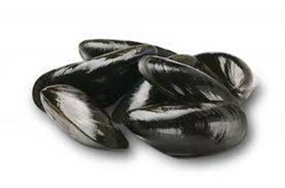 Picture of Full Shell Mussles- 10 X1 KG