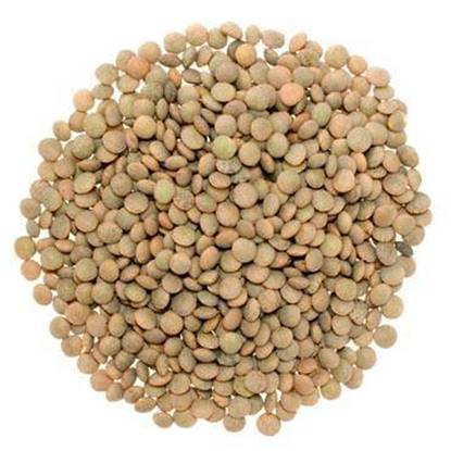 Picture of Lentils Whole-PER KG