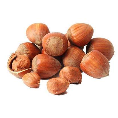 Picture of Hazel Nut With Shell USA