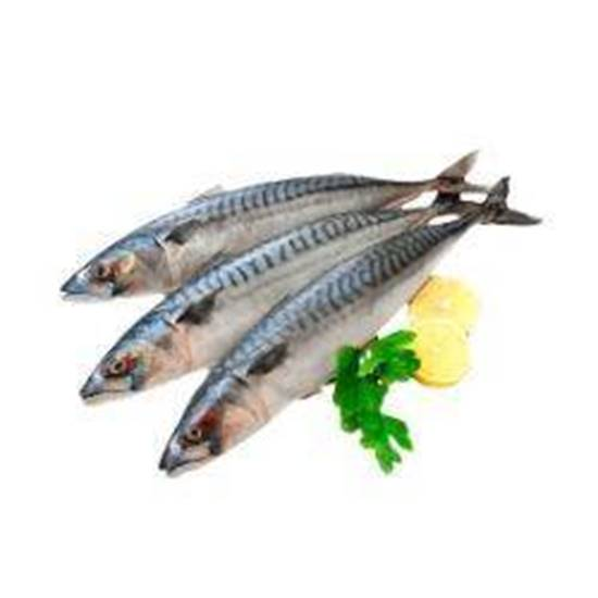 Picture of Mackerel Fish 1kg×8