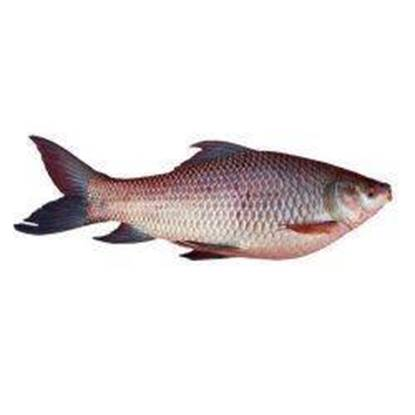 Picture of Rohu Fish 1 kg*10