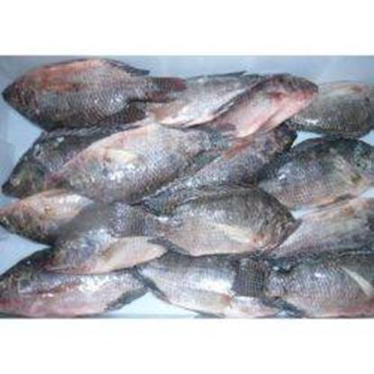 Picture of Tilapia Fish 1kg 400/600 g