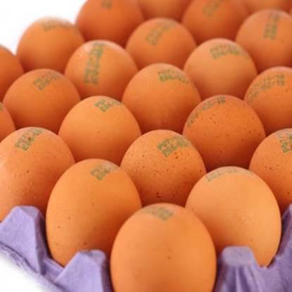 الصورة: مزرعة الياسمين بيض طبق 30 حبة