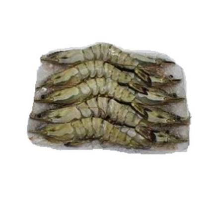 Picture of Frozen HO/SO White Shrimpss block 6x2 kg U 10