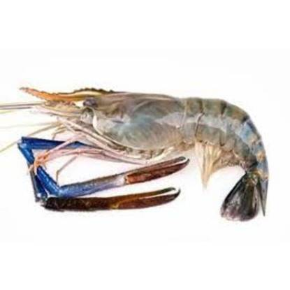 Picture of Frozen Shrimpss HO 1 kg U/7 Scampi
