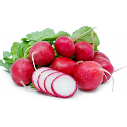 Picture of Radish Red - Holland (125GM)